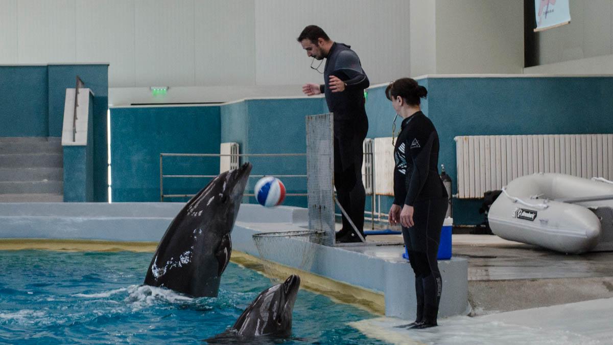 Constănțenii pot urmări antrenamente cu delfini de două ori pe zi