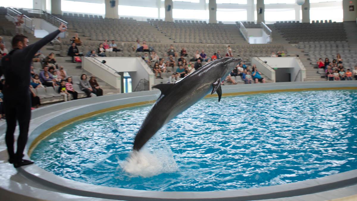 Imagini pentru Constanţa, primul delfinariu public photos