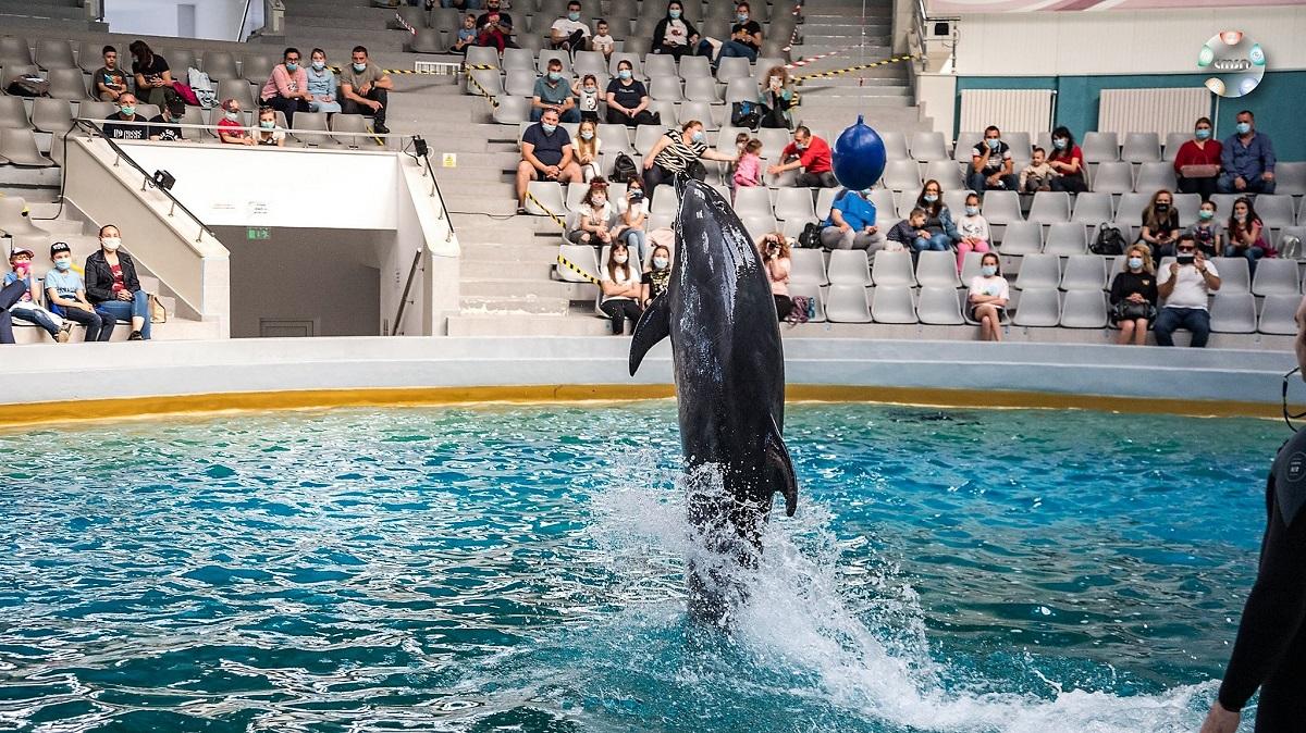 Delfinii fac spectacol de trei ori pe zi în acest sezon estival