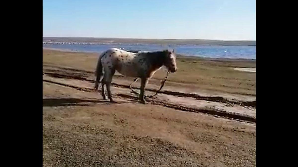 Anchetă la Techirghiol după ce peste 40 de cai se află abandonați, maltratați și malnutriți pe marginea lacului Zarguzon. UPDATE Caii au fost plasați într-un adăpost de animale din Peștera