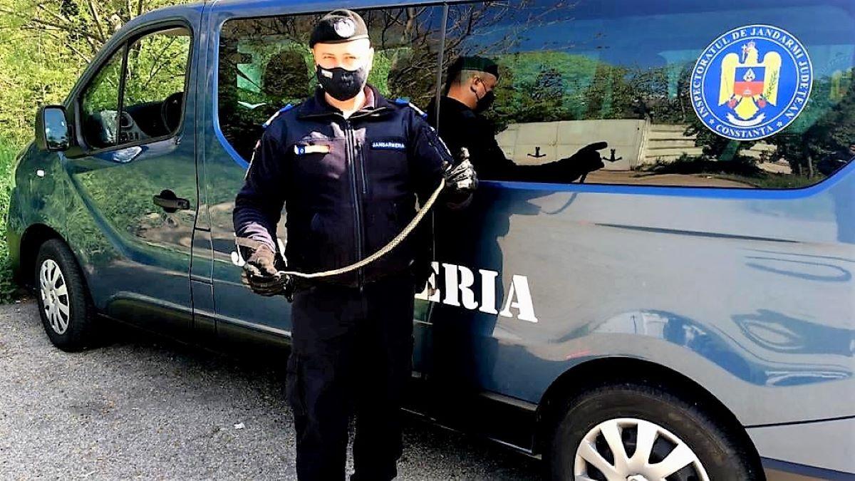 """Primăria Constanța susține că în mediul urban """"nu sunt șerpi veninoși"""", după ce mai multe astfel de reptile au fost găsite în diverse zone ale orașului"""