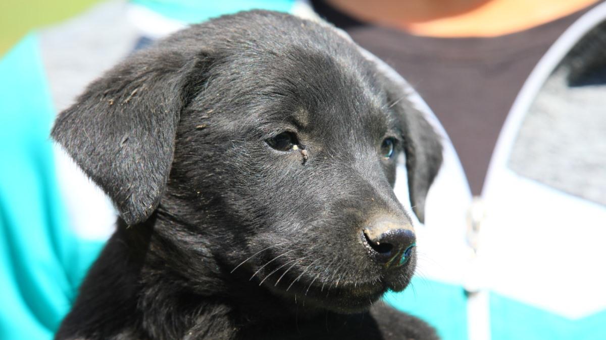 A doua etapă de sterilizare a câinilor fără stăpân în municipiul Constanța